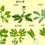 七草がゆは胃腸の調子を整える行事